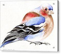 Colorful Chaffinch Acrylic Print by Nancy Moniz
