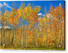 Colorful Colorado Autumn Landscape Acrylic Print by James BO  Insogna