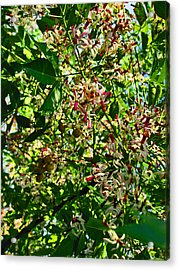 Colorful Fall Shrubs Too. Acrylic Print by Andy Za