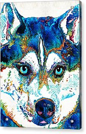 Colorful Husky Dog Art By Sharon Cummings Acrylic Print by Sharon Cummings