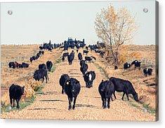 Coming Down The Road Acrylic Print by Todd Klassy