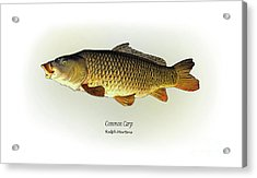 Common Carp Acrylic Print by Ralph Martens