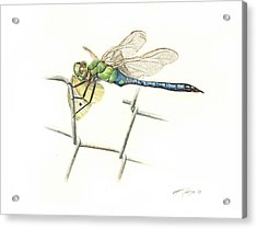 Common Green Darner Acrylic Print by Logan Parsons