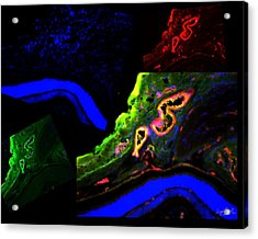 Complementary Cells And Colors-2 Acrylic Print by Zafer Gurel