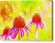 Cone Flower  Acrylic Print by Lanjee Chee