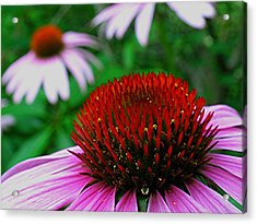Coneflowers Acrylic Print by Juergen Roth