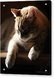 Contentment Acrylic Print by Renee Forth-Fukumoto