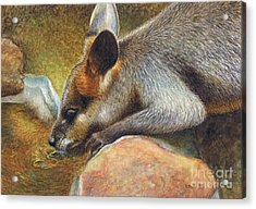 Cool Relief Acrylic Print by Karen Hull