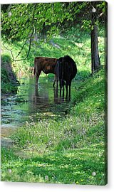 Cooling Spring Acrylic Print by Jan Amiss Photography