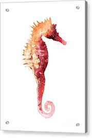 Coral Seahorse Watercolor Painting Acrylic Print by Joanna Szmerdt