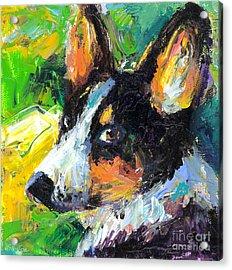 Corgi Dog Portrait Acrylic Print by Svetlana Novikova