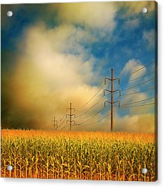 Corn Field At Sunrise Acrylic Print by Photo by Jim Norris
