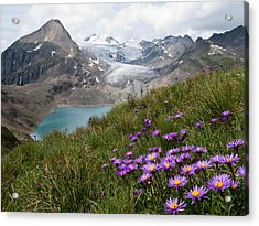 Aster Acrylic Print featuring the photograph Corno Gries, Switzerland by Vito Guarino