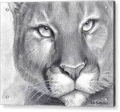 Cougar Spirit Acrylic Print by Carla Kurt