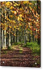Country Road Acrylic Print by Svetlana Sewell