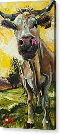 Cow 1 Acrylic Print by Claire Kayser