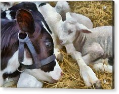 Cow And Lambs Acrylic Print by Michelle Calkins