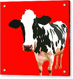 Cow In Red World Acrylic Print by Peter Oconor