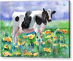 Cow In The Meadow Acrylic Print by Arline Wagner