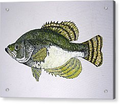Crappie Fish Of Usa  Acrylic Print by Don Seago