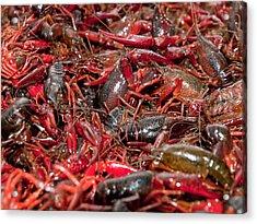 Crawfish Acrylic Print by Jim DeLillo