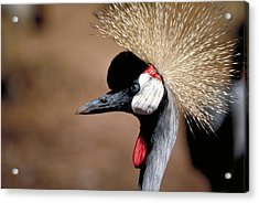 The I Can't Believe It Bird Acrylic Print by Carl Purcell