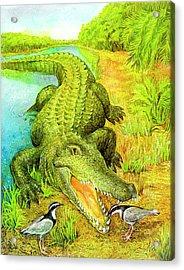Crocodile Acrylic Print by Natalie Berman
