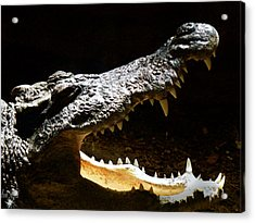 Crocodile Acrylic Print by Scott Hovind