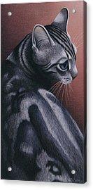 Cropped Cat 1 Acrylic Print by Carol Wilson