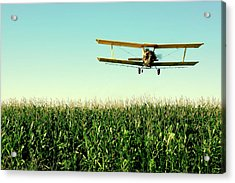 Crops Dusted Acrylic Print by Todd Klassy