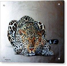 Crouching Leopard Acrylic Print by Susana Falconi