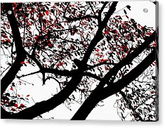 Crow And Tree In Black White And Red Acrylic Print by Dean Harte