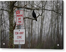 Crow Asking For A Citation In Magnuson Park In Seattle Acrylic Print by Shirley Stevenson Wallis