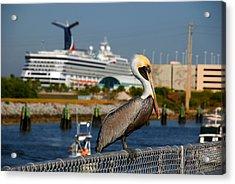 Cruising Pelican Acrylic Print by Susanne Van Hulst