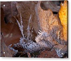 Crystaline Life Acrylic Print by Douglas Barnett