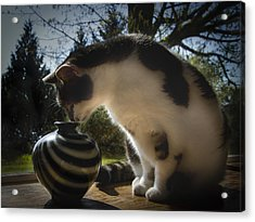 Curious Cat Acrylic Print by Jean Noren