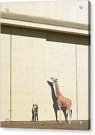 Curious Giraffe Acrylic Print by Richard Newstead
