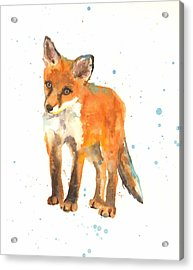 Curious Kit Acrylic Print by Alison Fennell