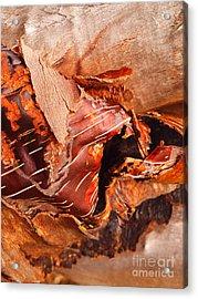 Curled Bark Acrylic Print by Tara Turner