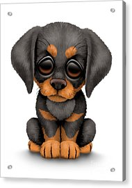 Cute Doberman Puppy Dog Acrylic Print by Jeff Bartels