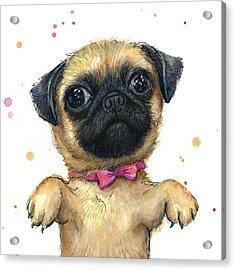 Cute Pug Puppy Acrylic Print by Olga Shvartsur