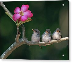 Cute Small Birds Acrylic Print by Photowork by Sijanto