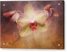 Cymbidium Orchid Acrylic Print by Tom Mc Nemar
