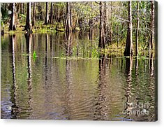 Cypresses Reflection Acrylic Print by Carol Groenen