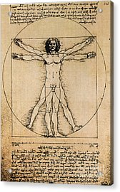 Da Vinci Rule Of Proportions Acrylic Print by Science Source
