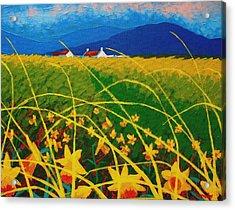 Daffodil Landscape Acrylic Print by John  Nolan