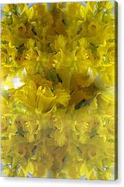 Daffodils Spring 2015 Acrylic Print by Tina M Wenger