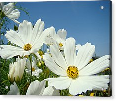 Daisies Flowers Art Prints White Daisy Flower Gardens Acrylic Print by Baslee Troutman