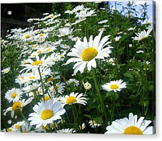 Nature Acrylic Print featuring the photograph Daisies by Roberto Alamino