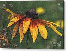 Daisy Acrylic Print by Diane E Berry